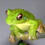 tfrog